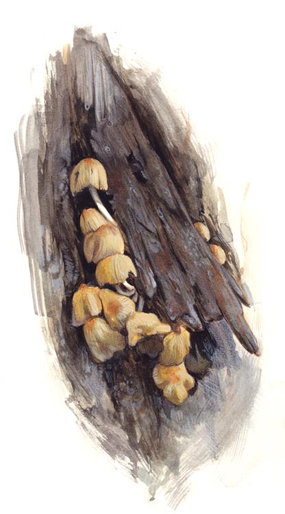 Mushroom Still-Life