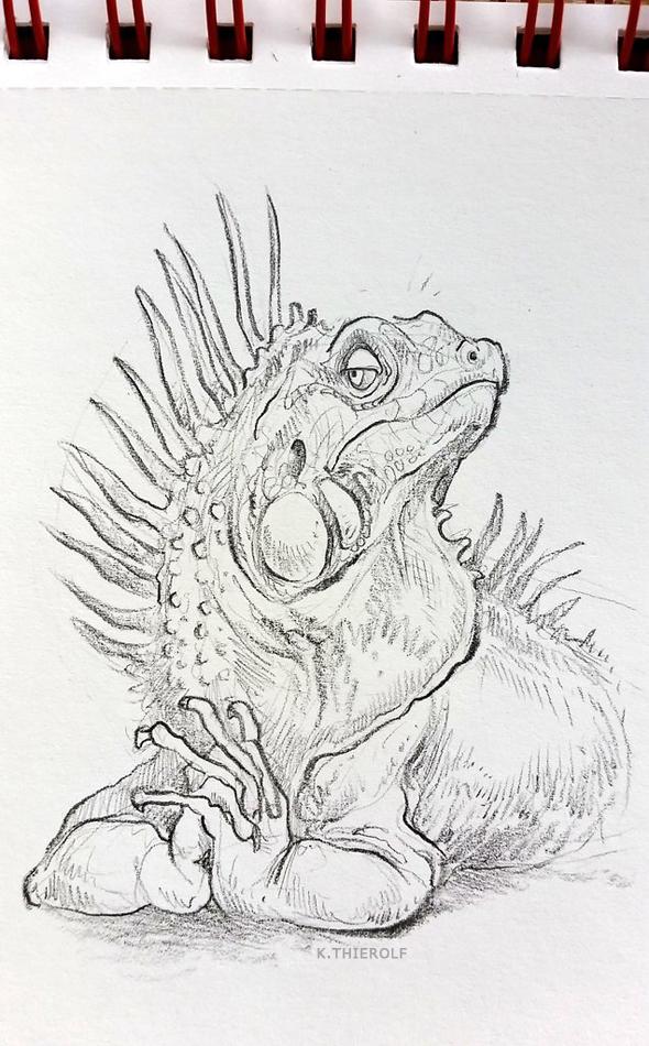Haughty Iguana