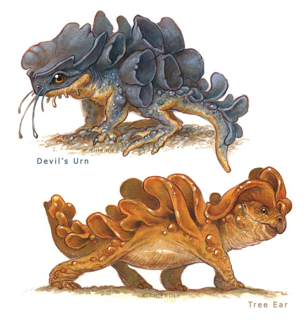Devil's Urn and Tree Ear Mimics