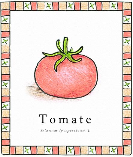tomate22.jpg
