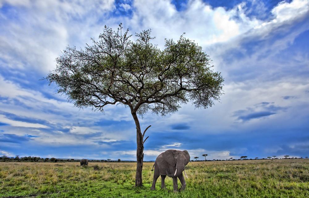 shows ele and tree.jpg