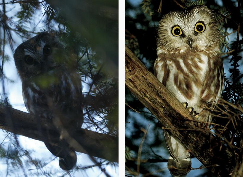 rick sammon owl.jpg