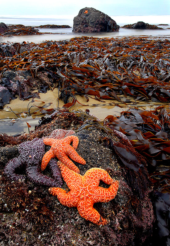 Alex_Morley_Strawberry_Stars-&-Kelp.jpg
