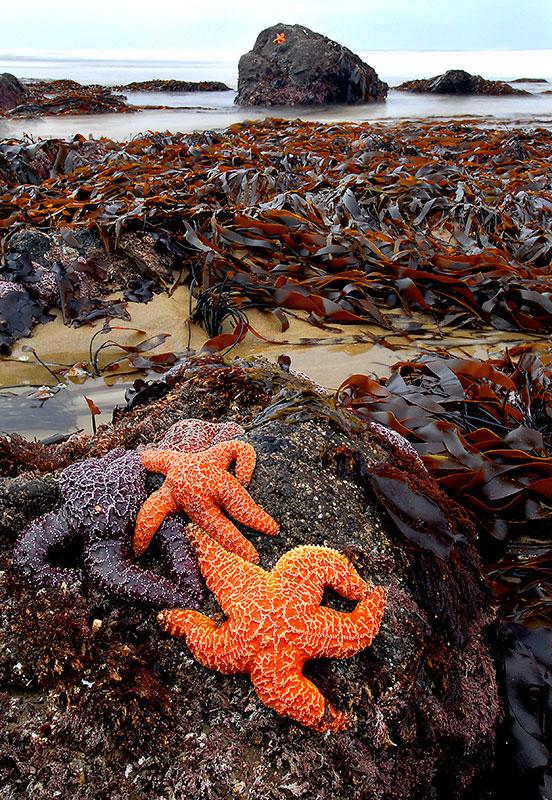 Alex_Morley_Strawberry_Stars-&-Kelp.jpg
