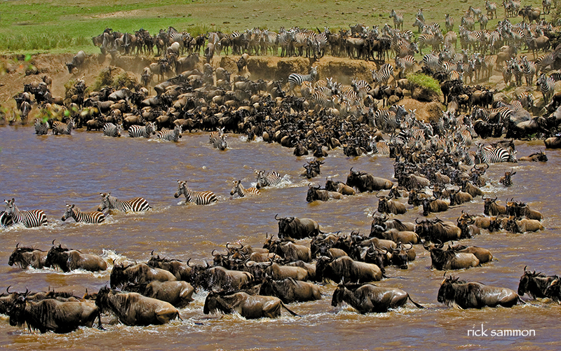Great migration, Kenya. Canon 100-400mm IS lens.