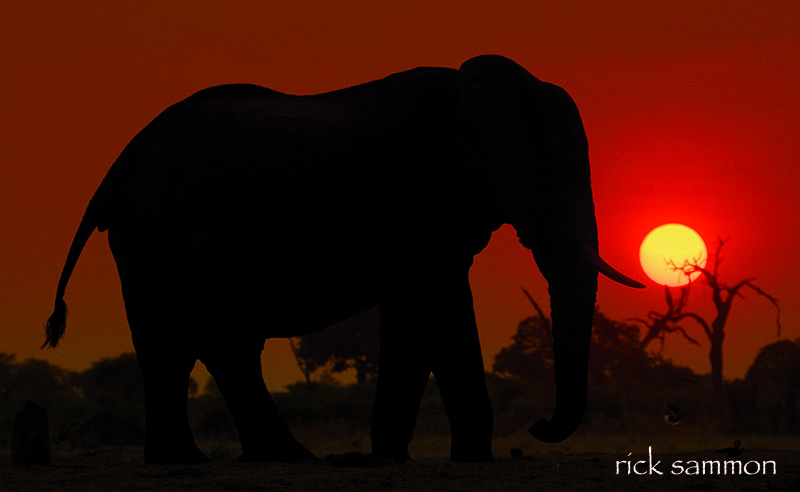 rick africa.jpg