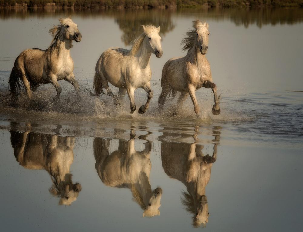 rick sammon camargue horses 1.jpg