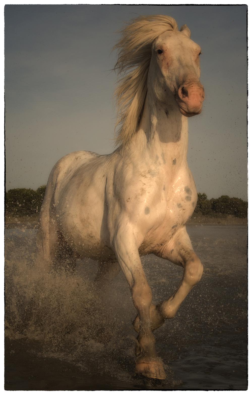 rick sammon camargue horses 6.jpg