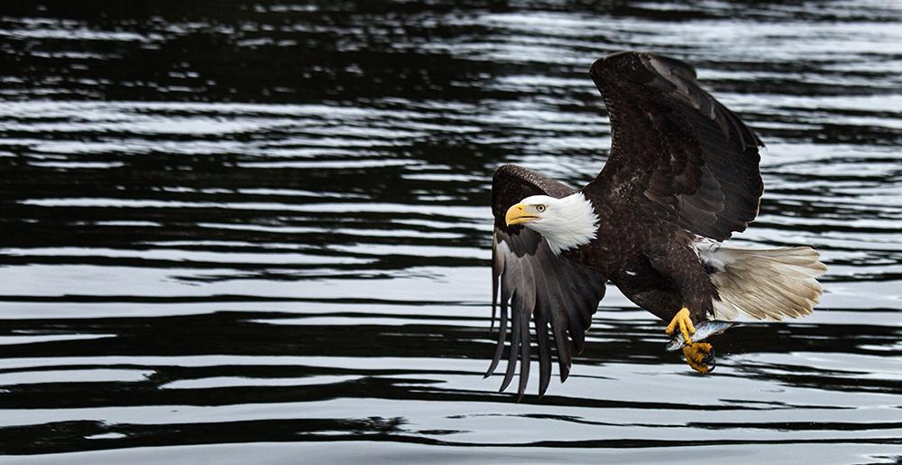 Rick Sammon Alaska 1.jpg