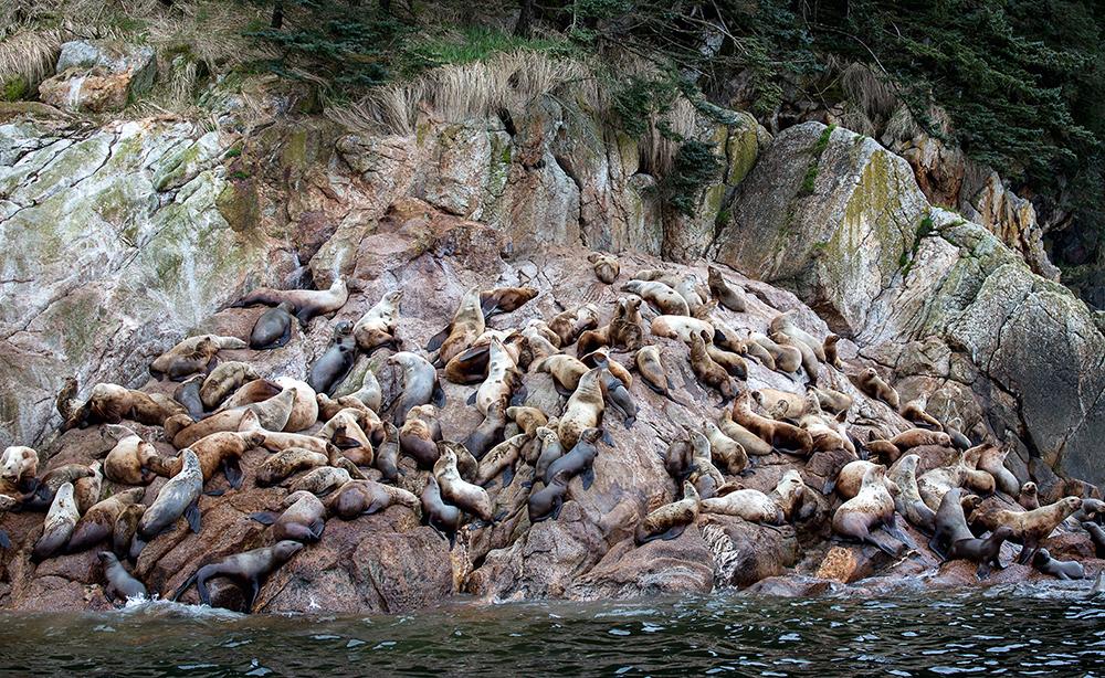 RIck Sammon Alaska 3.jpg