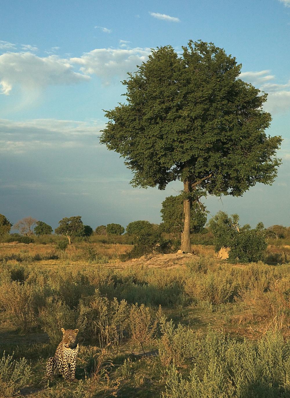 rick sammon botswana 8.jpg