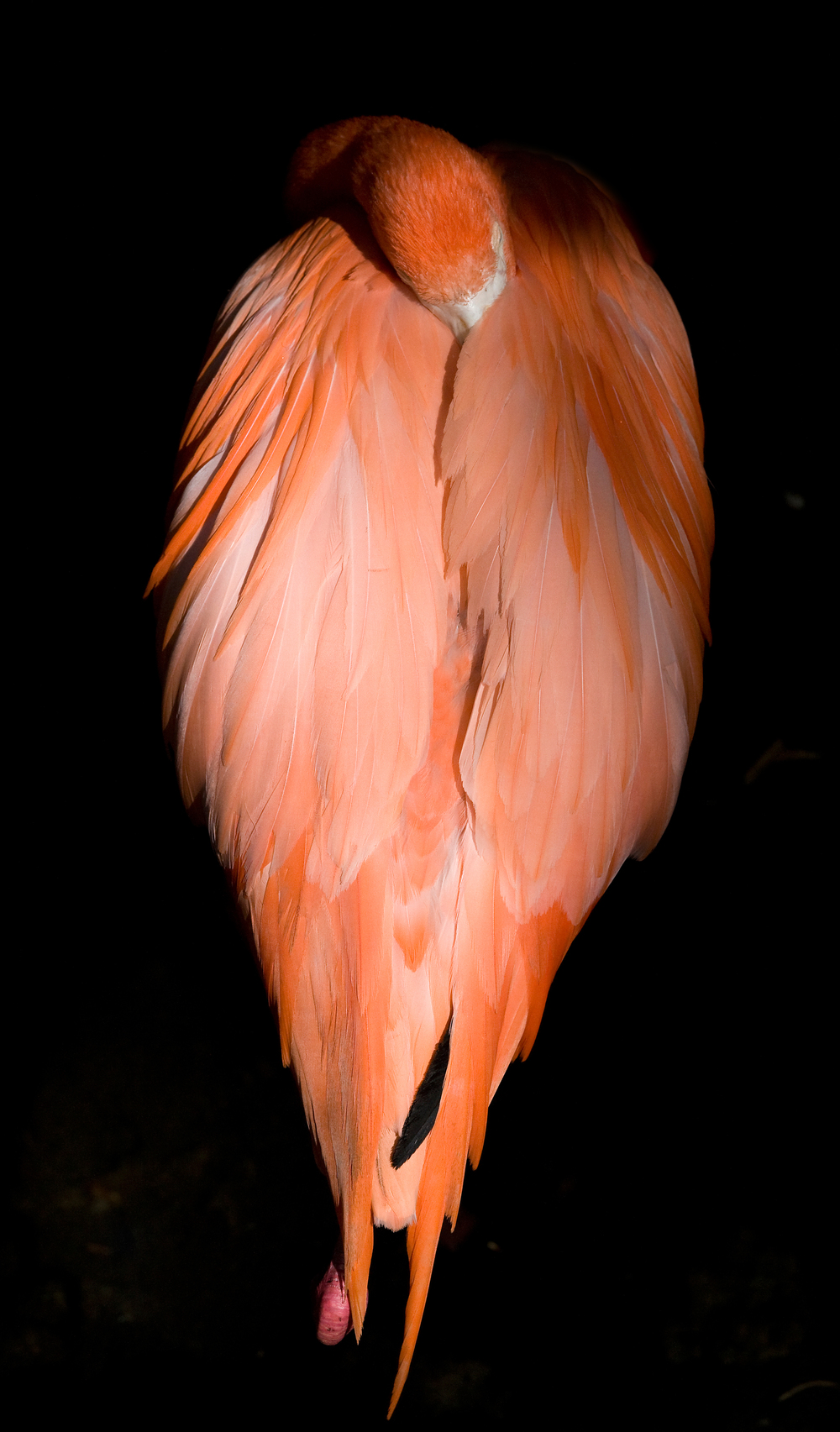 Rick Sammon's Birds032 copy.jpg