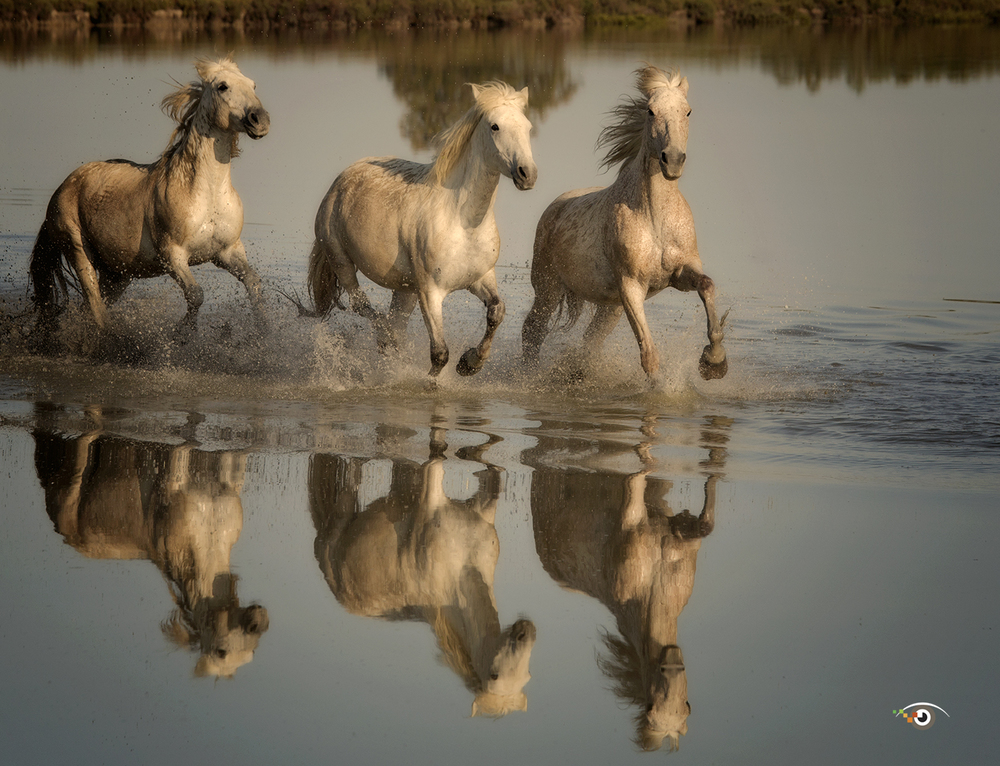 7 tips for photographing running horses which you can use on my