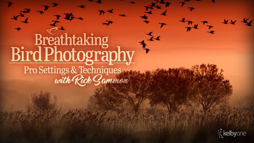 NOTC_Social_01.24.18_RSammon_BirdPhotography_TW1320x660.jpg