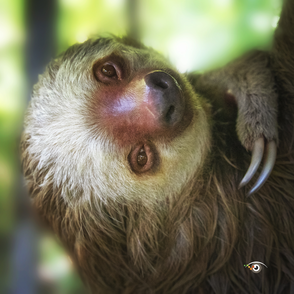 Rick Sammon Costa Rica 6.jpg