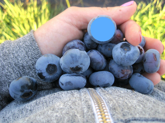 bluedothome.jpg
