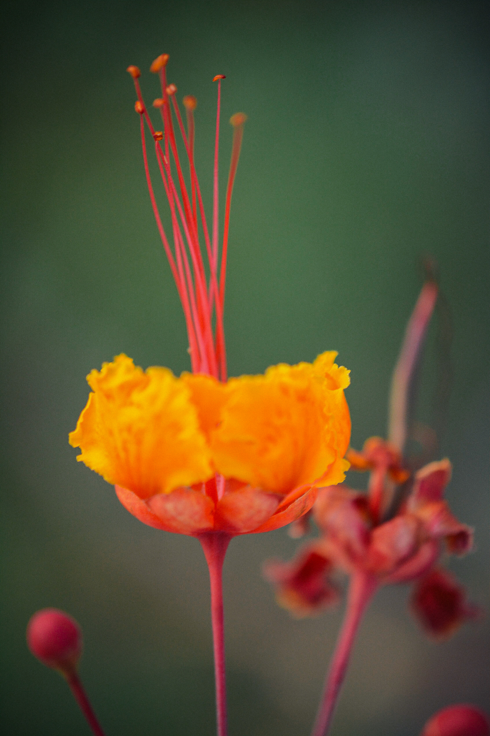 Red and Yellow Flower.jpg