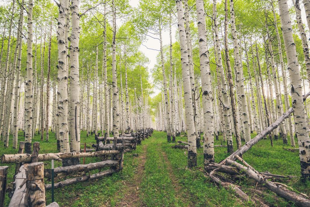 -T Ranch Montrose Colorado-107-HDR-4K.jpg