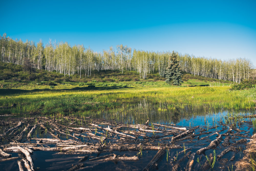 -T Ranch Montrose Colorado-10-2-HDR-4K.jpg