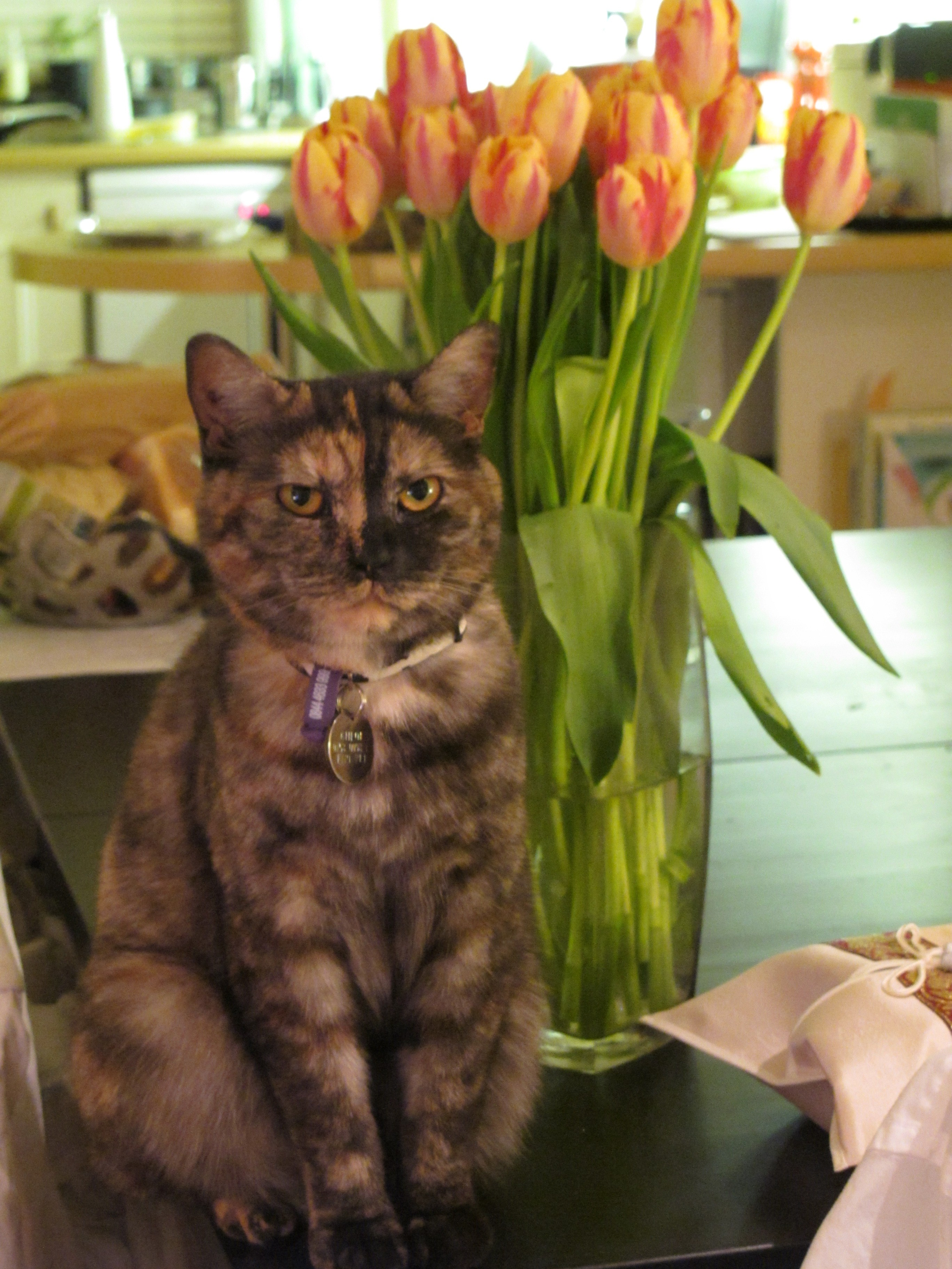 Chloe & tulips