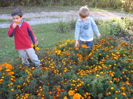 flowerboys.JPG