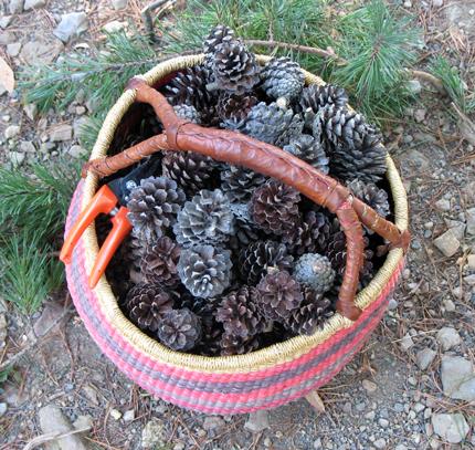 pinecone-basket.jpg