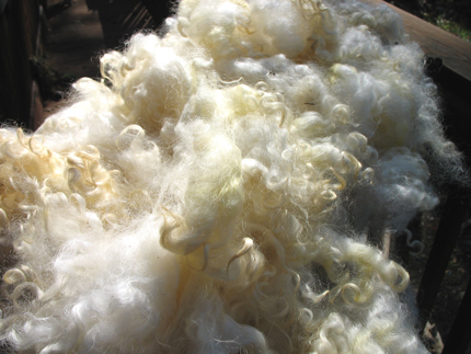 clean-wool.jpg