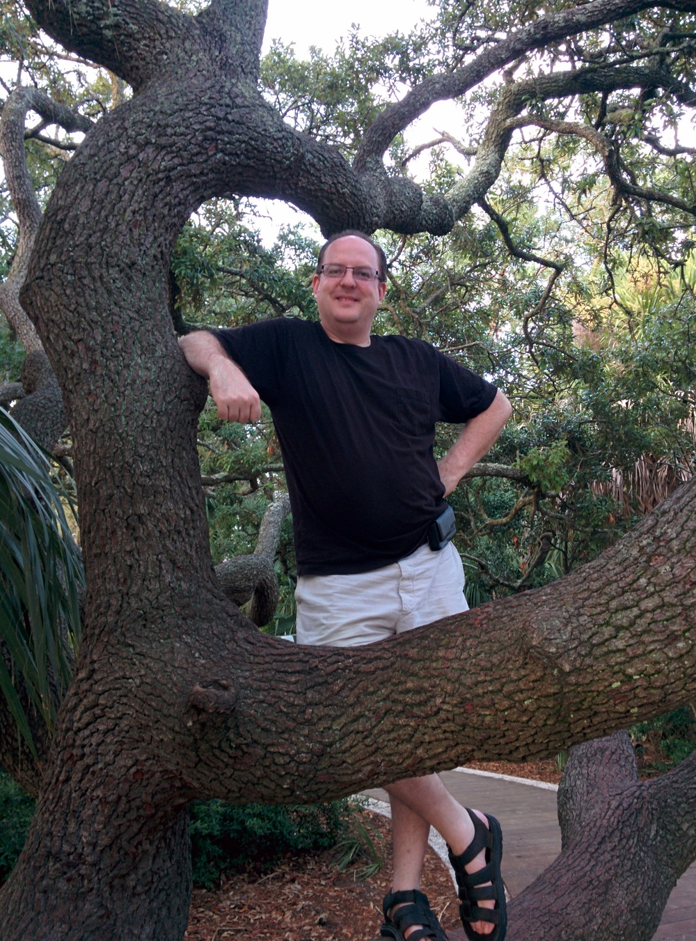 This is me... in a tree.