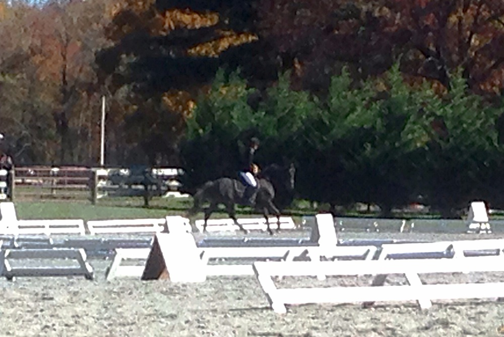 Dressage test at Waredaca Fall Starter HT-- Diaz's 2nd show