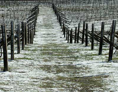 Lark-Hill-Snow-Covered-Vineyard.jpg