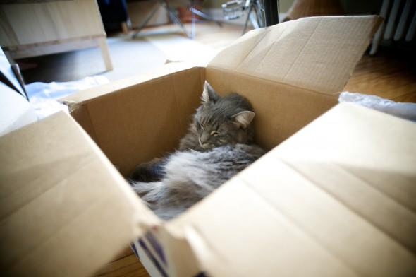 Norah sound asleep in box