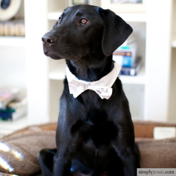 Wedding Dog in bowtie