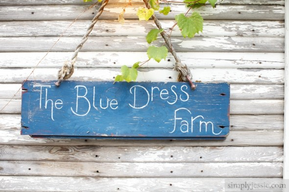 Blue Dress Barn Michigan
