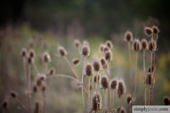 Prairie Flowers in fall