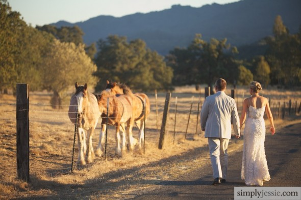 Horses & Bride in Sonoma CA