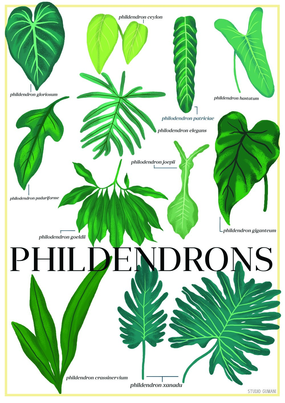 phildendrons poster_sm.jpg
