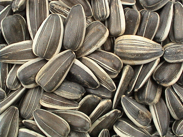 sunflower-seed-pictures[1].jpg