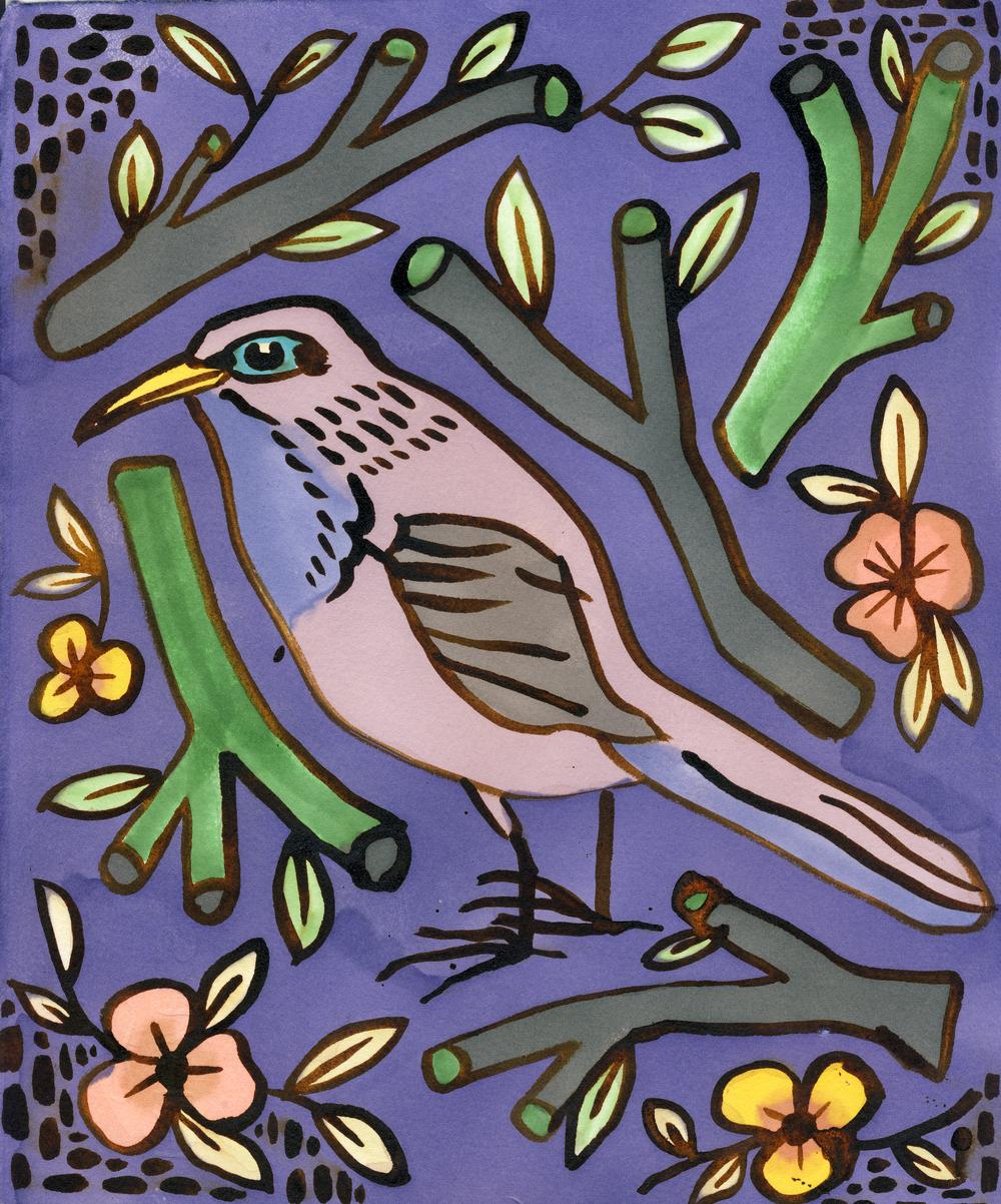 cody bird.jpg