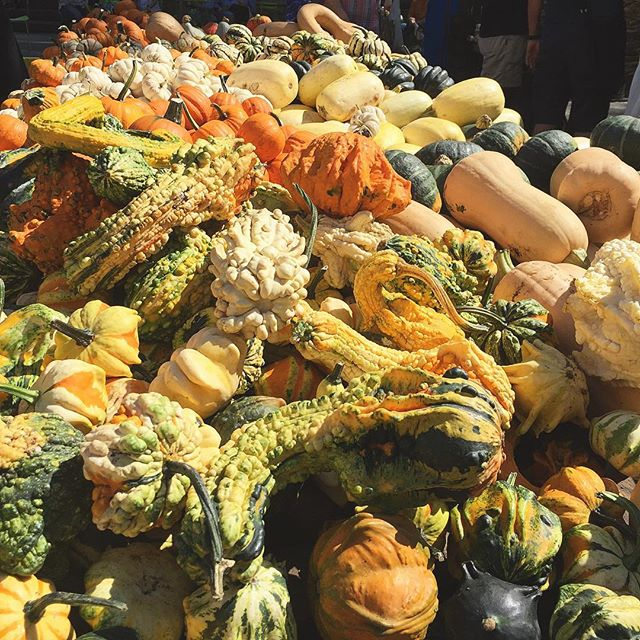 Officially Fall | Union Square Farmers Market  #farmersmarket #fall #squash #gords #pumpkins #pumpkinpatch #latergram #fallfood