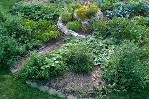 spiral_mandala_garden.jpg