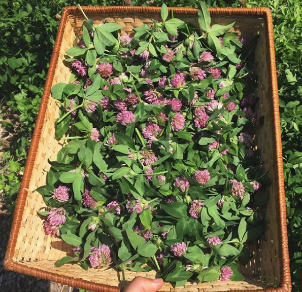 FRF Fresh Red Clover.png