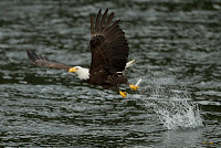 20110709_IP_EagleWhale-169.jpg