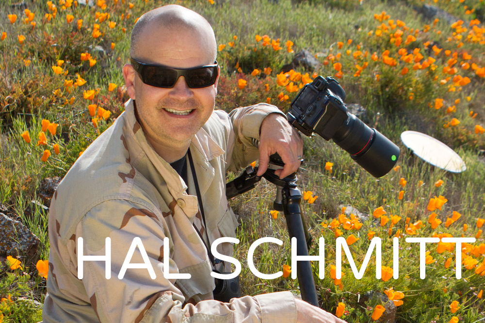 Hal Schmiitt is a master of all things  digital photography . He teaches photography techniques of all kinds, such as portraits, wildlife, lighting all the way down to basics. Hal also is the best Lightroom and Photoshop instructor around. Hop over to our courses page and let your mind soar with the possibilites! Sign up for one of our courses and take your passion to the next level.