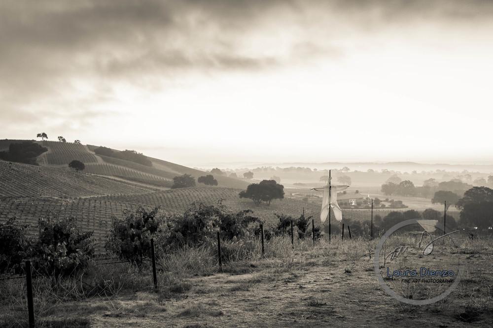 LauraDienzoscarecrow-landscape-web-1.jpg