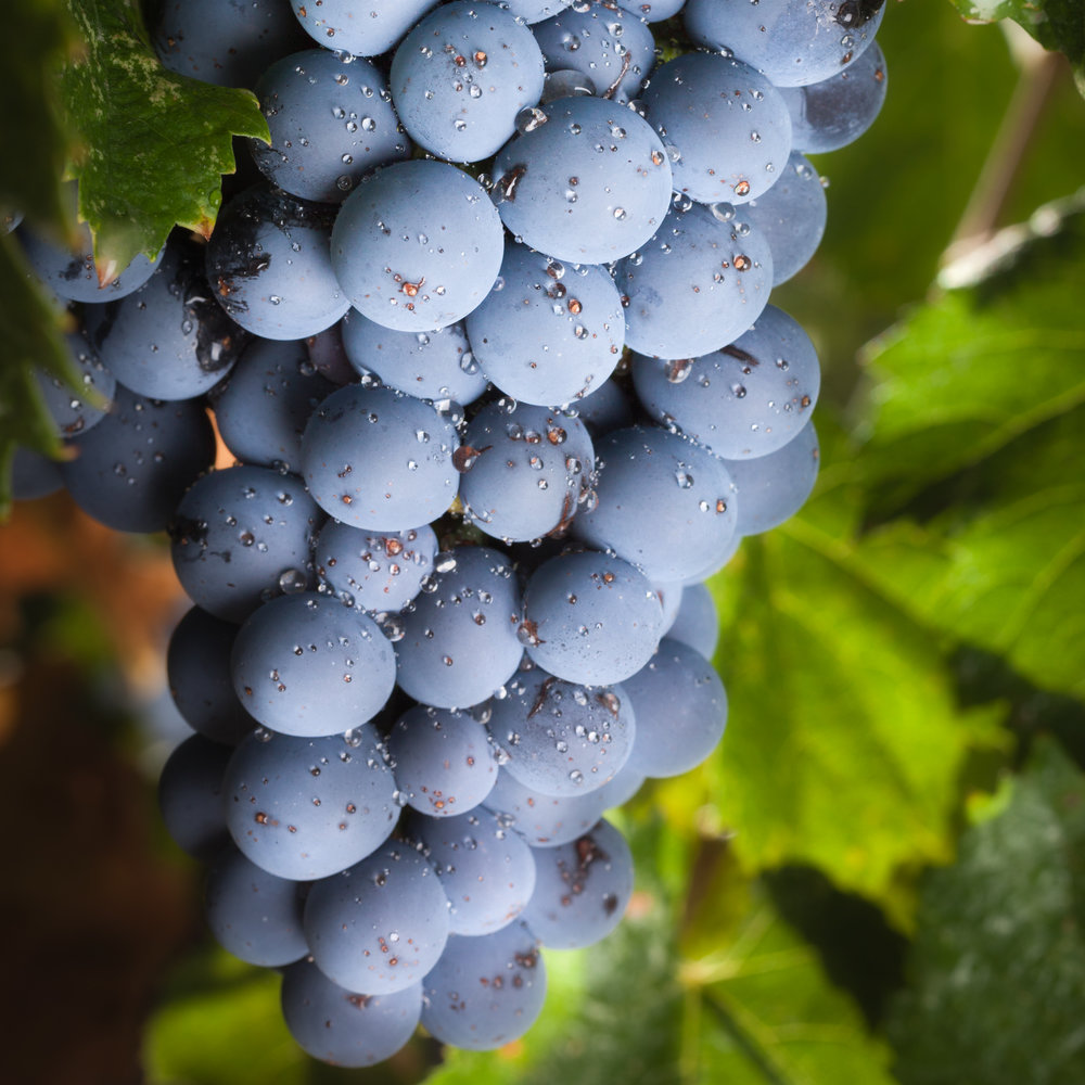 20120908_Paso_VineyardClass-237-Edit.JPG