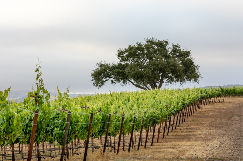 20180618_GatewayVineyard-23-HDR.JPG
