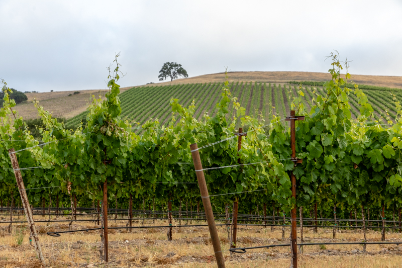 20180618_GatewayVineyard-58-HDR.JPG