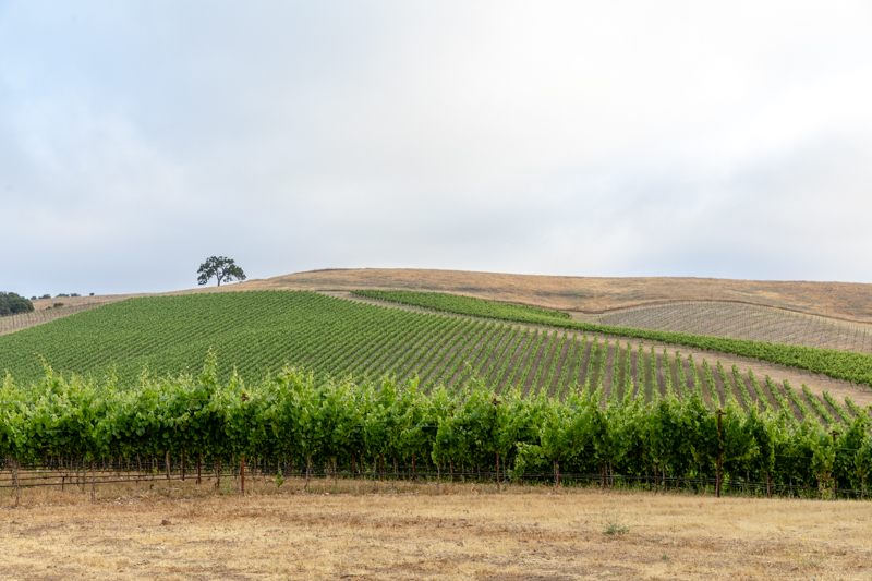20180618_GatewayVineyard-87-HDR.JPG