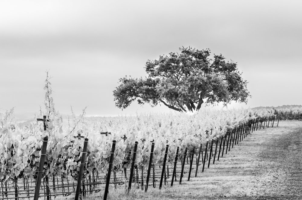 20180618_GatewayVineyard-23-HDR-2.JPG