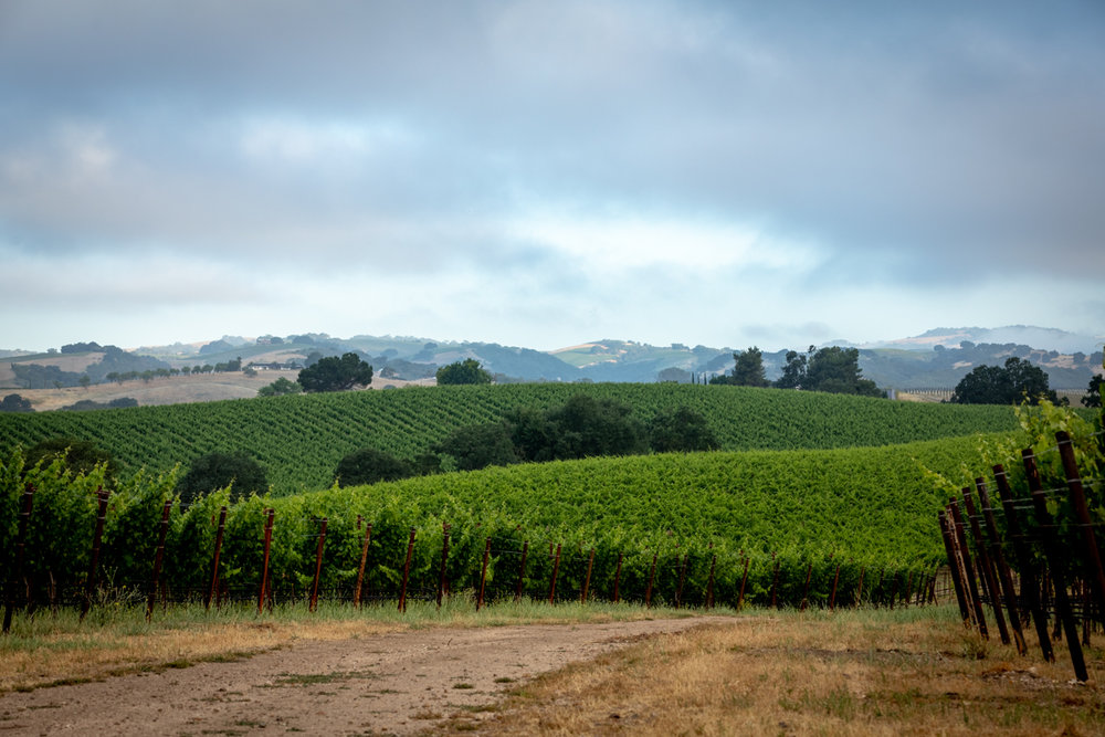 20180618_GatewayVineyard-42-HDR.JPG